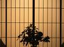[가나자와(Kanazawa, 金澤)] 일본 이시카와 현[石川縣]의 현청소재지인 가나자와(Kanazawa)로 가다 / 토함