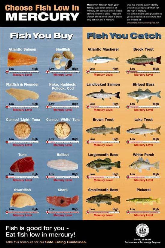 Ebs 3 for Cod fish mercury