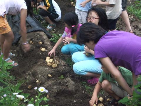 산장을 찾은 어린 농부들의 감자캐기